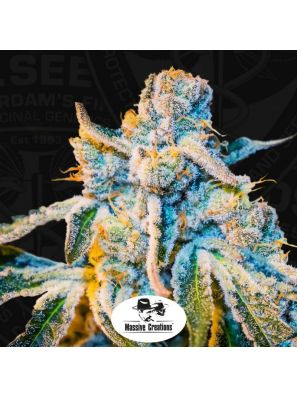 TH Seeds - Cannabis Seeds