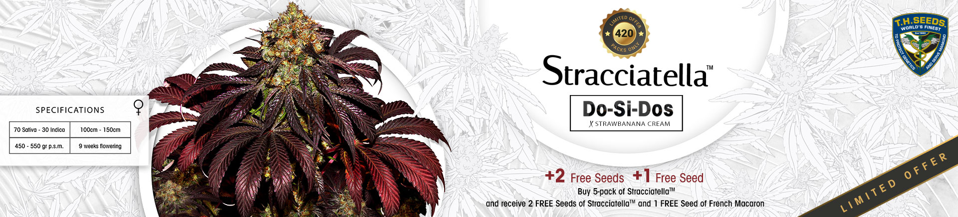 Th Seeds Promo Straciatella